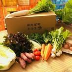 こどもの味覚を育む野菜セットM (野菜8種、卵10個)