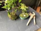 苔盆栽ワークショップ