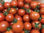 有機ミニトマト【千果】1.8kg