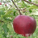 【10月上旬〜12月上旬】今は『ふじ』!人と自然がよろこぶ「感じるリンゴ」季節厳選品種