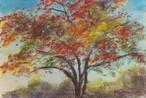 NO.36「陽に透けるモミジ・11月」