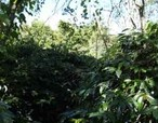 【Artisanal Dark】スマトラ マンデリン 100g Sumatra Mandheling 100g