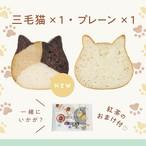 《9月の新商品》【紅茶のおまけ付き】子ねこハウス付き!ねこねこ食パン(プレーン&三毛猫)【送料・税込】