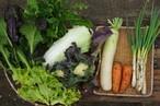 旬の野菜BOX M(6-8品)