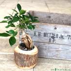 MangoWood PotCover [stem W9710]