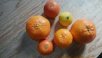季節の柑橘詰め合わせ(2・3月)【5kg】