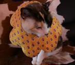 猫のエリザベスカラー フラワー Yellow
