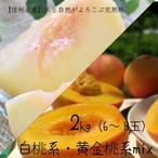 (8月20日以降発送開始)人と自然がよろこぶ完熟桃・とろり黄金桃 mix 2kg(6〜8玉)