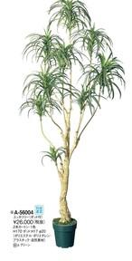 ユッカ      花言葉「成長」「発展」「勇壮」「偉大」 高さ:170cm