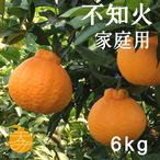 送料無料 天デコ 不知火 肥の豊(デコポン)家庭用6kg M〜2L 熊本県産 冬のギフト