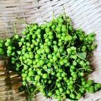 天然の実山椒 500g(生タイプ・枝付き)