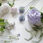 季節の花教材<夏>