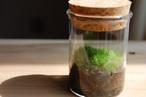 苔テラリウム ✶小さな山苔テラリウム✶