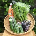 季節の野菜セット【お試しサイズ】6品 送料無料