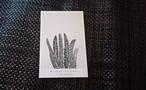 植物 ポストカード D-2
