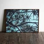 Aloe bainesii / B2 poster