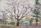 NO.98「桜とムラサキハナナ・4月」