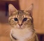 猫と暮らす全ての人に考えてもらいたい~愛猫のために今あなたができること~
