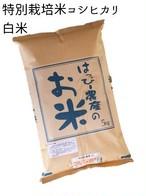 愛知県産 コシヒカリ(白米)5kg【はっぴー米】