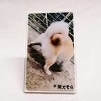 【1/28発売】柴犬そら アクリルスタンドA