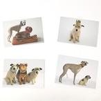羊毛犬のカード(封筒付き) by Domenica More Gordon