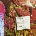 赤莧菜 / red leaf amaranthus / ผักโขมแดง 100g