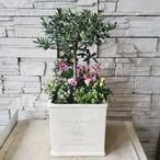 香川県産オリーブ【souju】株元寄せ植え オリーブ柄鉢