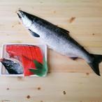 紅鮭 中大サイズ 甘塩 1尾
