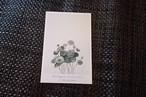 植物ポストカード B-2