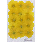 コンパクト押し花 ジュリアン 少量をパックにしてお届け! 押し花素材