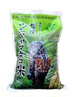 ≪先行予約≫【5Kg袋単品】『自然と人のくらしをつなぐ佐護ツシマヤマネコ米』