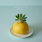 mysterious fruit pot (grapefruit) パキポディウム・エブレネウム