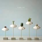 地上に降りてきた雲(small)(植物)