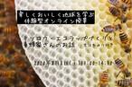 【夏休みSDGSs体験学習】ミツロウラップづくりと養蜂家さんのお話