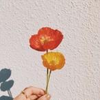 mini flower/ポピー/一輪挿し