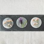 ※限定6【4/27-29販売】シェル×押し花の耳飾り