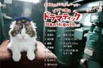 ベストアルバム 『ドラマティック日本のうた 愛のうた』vol.2 妹尾哲巳