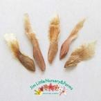 プルメリアの種: JL Pupukea Crepe(5粒入り)