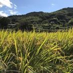 玄米(10kg)無農薬栽培