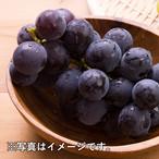 鳥取・湯梨浜町産 大粒ピオーネ 2㎏(大きさにより3房〜4房)