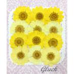 コンパクト押し花 ムルチコーレMix 少量をパックにしてお届け! 押し花素材