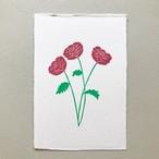 postcard (ranunculus)