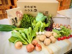 【新米!予約受付中!9/15~】こどもの味覚を育むお米・野菜セットM (お米3kg、野菜8種、卵10個)