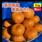 送料無料 青島みかん5kg(家庭用)