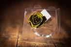 【花の誕生日プレゼント】プリザーブドフラワー/Jewel Ring-誕生日カラー-8月