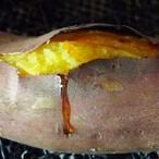 蔓無源氏 百年昔のサツマイモ 5kg 【予約販売】