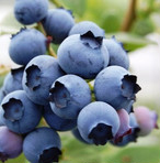 Blueberry (BIG)  ブルーベリーのジャム (BIG)