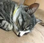 キャットカラー/ CAT coller