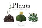 Plants 3種 ポストカード
