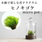 小さな苔の森 ヒノキゴケ micro pot ◆始めて苔テラリウムを育てる人向け 【苔テラリウム】